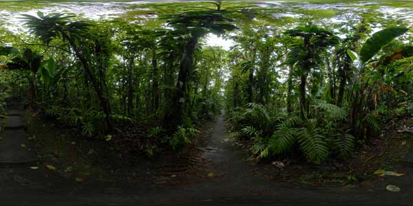 panorama 360° of martinique trpical forest, le domaine d'emeraude, french west indies