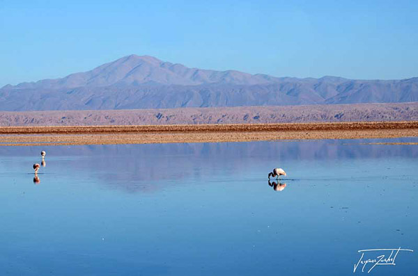 Photo of Chile, salar de atacama