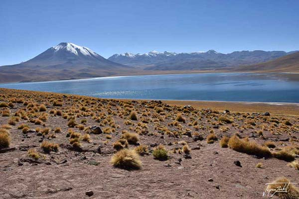 lagunas altiplanicas are in the high plateaus of the Andes.