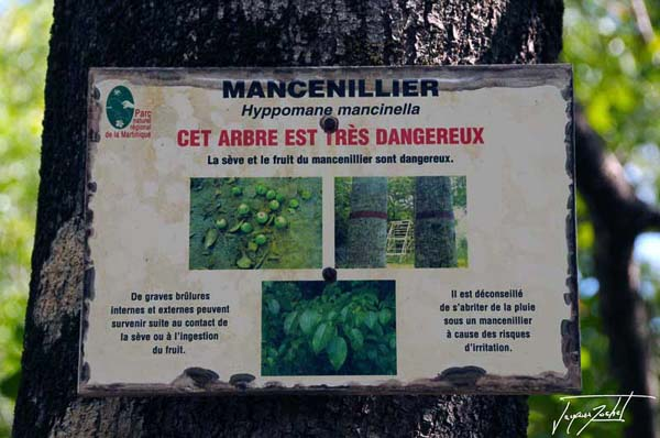 sign for Mancenillier, toxic tree Martinique, French Antilles