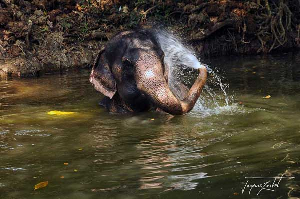Elephant bathing in Thailand